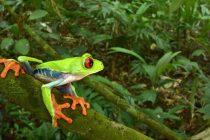 """U """"izgubljenom gradu"""" u Hondurasu otkriveno pravo životinjsko blago"""