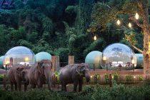 Neobični hotel s pogledom na slonove