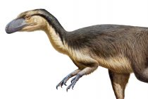 Postojao je dinosaurus sa perjem?