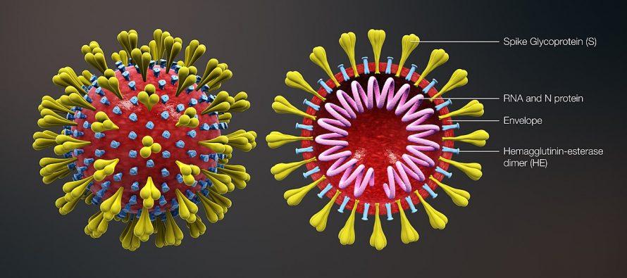 Da li korona virus napada mozak i nervni sistem?