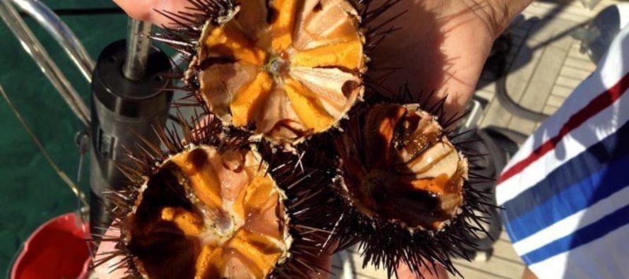 Bodljikavi delikates – morski ježevi na tanjiru!