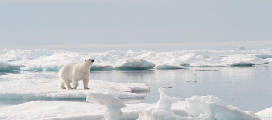 Nestanak polarnog medveda