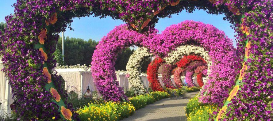 Najveći cvetni vrt na svetu u sred pustinje!