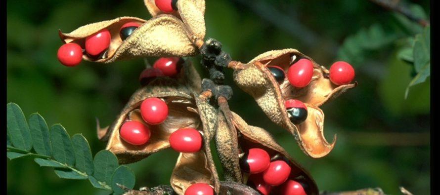 Najsmronosnije biljke na svetu