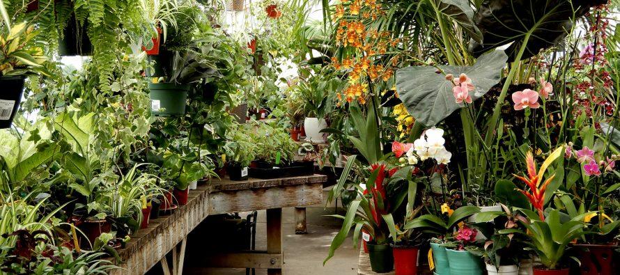 Biljke kao biološki filteri