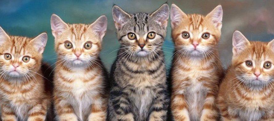 Mačke produžavaju život