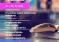 Obrazovanje i kultura na samo klik od vas – počinje prvi online Sajam obrazovanja