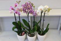 Orhideja je najlepša parazitska biljka