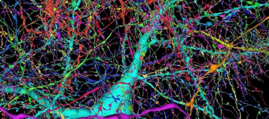Mapiran ljudski mozak
