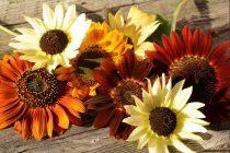 Cvet koji je božanstvo za gotove sve kulture sveta
